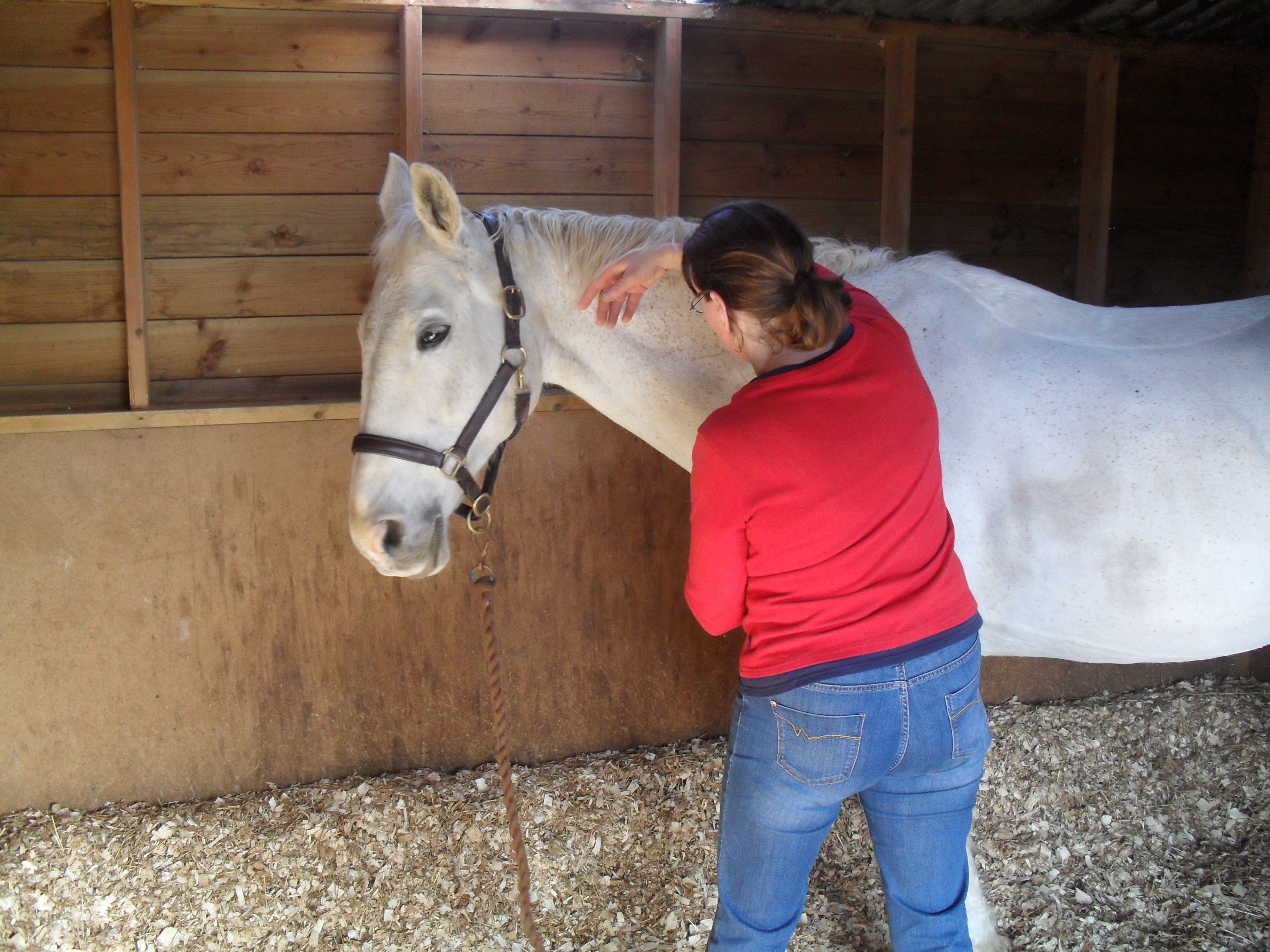 Horse equine physical therapy -  The Horse Should Be Seen By A Vet In The First Instance On Their Permission Physical Therapy Can Then Be Carried Out To Help Alleviate And Remove The