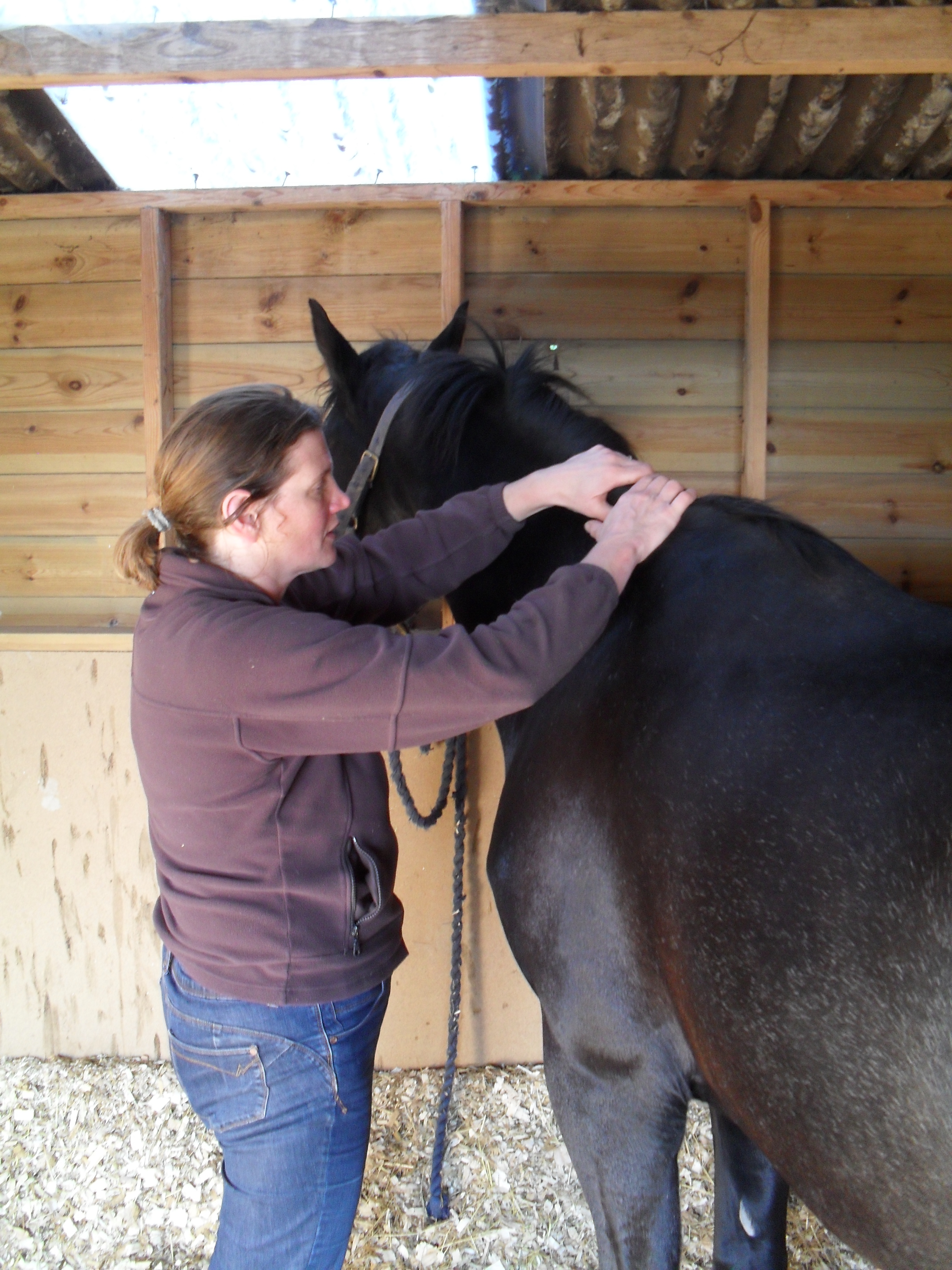 Equine physical therapy - Physical Therapy Is Not An Alternative For Veterinary Treatment And Veterinary Permission Is Required But It Can Be A Valuable Tool As Part Of The Horses